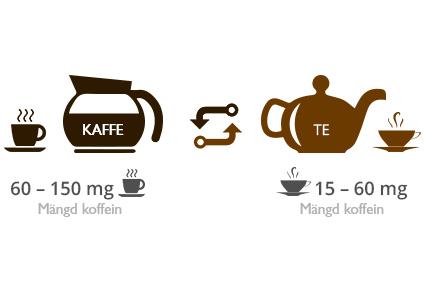 Hur mycket mer koffein är det i kaffe jämfört med te?